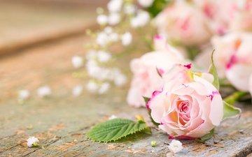 розы, лепестки, букет, романтик, цветы, роз, пинк, гипсофила