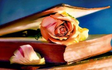 арт, рисунок, цветок, роза, книга
