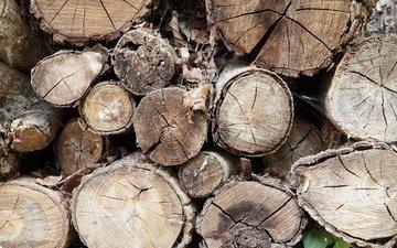 дерево, узор, дрова, бревна, деревь, дерева, хворост