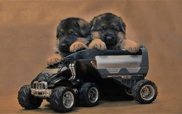 toy, puppies, dogs, shepherd, machine