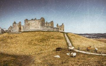 замок, лошади, шотландия, соединенное королевство, ruthven barracks, kingussie