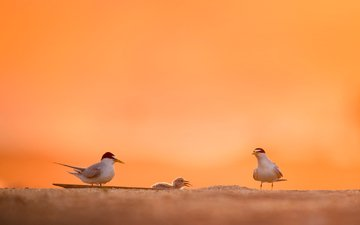 the sky, nature, animals, sand, blur, birds, ray hennessy