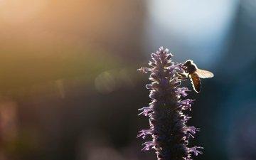 свет, насекомое, цветок, размытость, пчела, ray hennessy