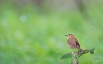 nature, forest, blur, bird, animal, bokeh, ray hennessy