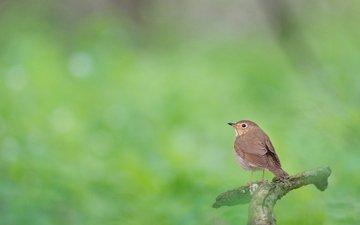 природа, лес, размытость, птица, животное, боке, ray hennessy