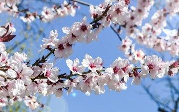 небо, цветение, сад, весна