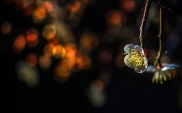 ветка, цветение, весна, боке