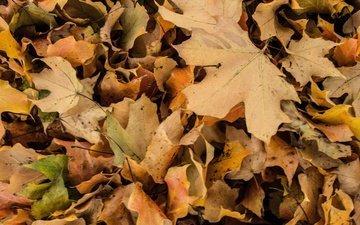 природа, листья, макро, осень