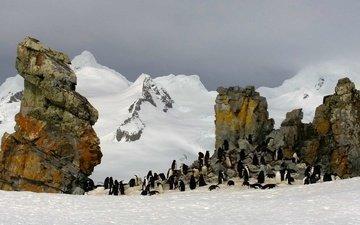 скалы, антарктида, пингвины