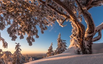trees, snow, winter, finland, koli national park, north karelia