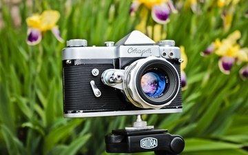 цветы, ссср, фотоаппарат, старт