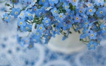 цветы, природа, макро, фон, незабудка