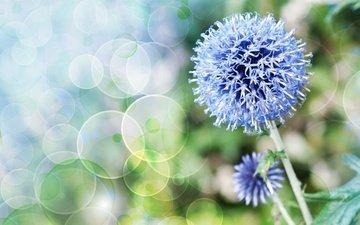 природа, цветок, растение, стебель, боке