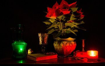 the darkness, flower, plant, vase, candle, book, still life, pot