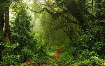 трава, деревья, природа, лес, листья, тропинка, тропа, джунгли, заросли