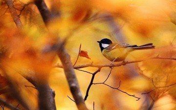 ветки, листва, осень, птица, синица