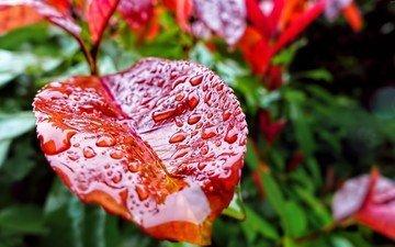 вода, зелень, макро, капли, осень, лист, растение