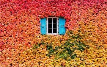 природа, цвета, листья, листва, осень, дом, окно