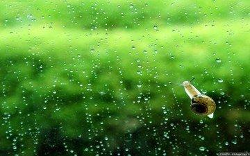 фон, капли, дождь, стекло, улитка