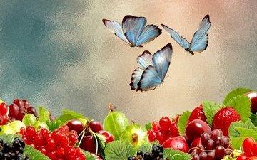 бабочка, насекомые, ягоды, бабочки, коллаж