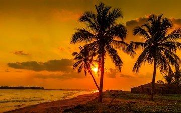 небо, облака, солнце, берег, закат, море, пальма, шри-ланка
