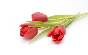 цветы, красные, букет, тюльпаны, белый фон