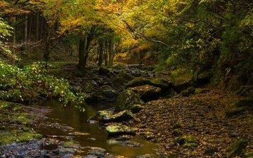 деревья, камни, лес, листья, ручей, ветки, листва, осень, мох