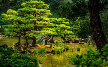 trees, stones, greens, the bushes, japan, garden, kyoto, pond, the reeds