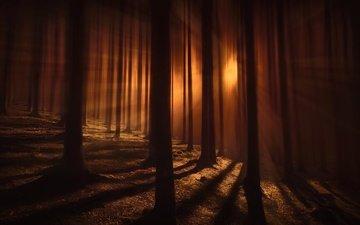 деревья, лес, тени, просвет, полумрак