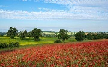 the sky, clouds, trees, field, summer, red, maki, mac