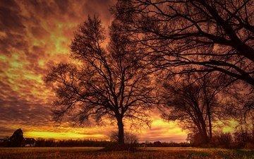 небо, облака, деревья, вечер, ветки, силуэт, зарево