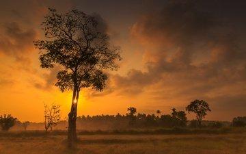 небо, облака, деревья, закат, зарево