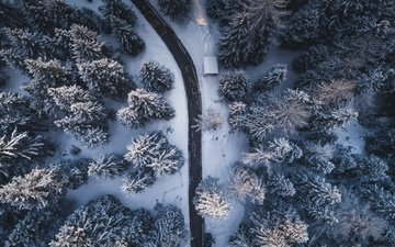 road, trees, nature, forest, winter, the view from the top