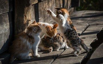 pose, cats, kittens, legs, yuriev yu