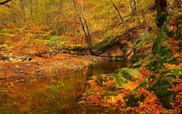 лес, ручей, листва, осень, поток, листопад