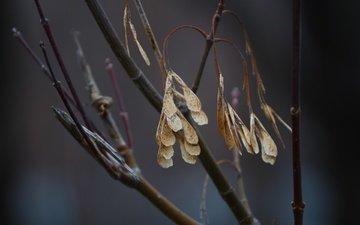 природа, листья, фон, ветки, сухие листья