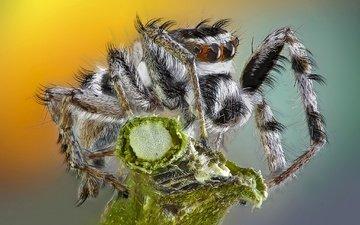макро, насекомое, фон, паук, травинка