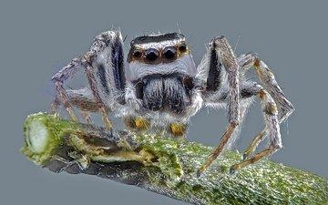 макро, насекомое, фон, паук