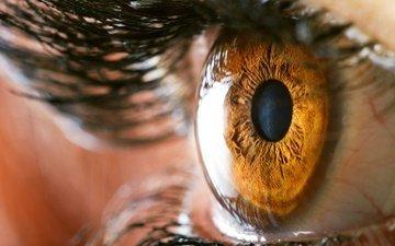 глаза, макро, глаз, ресницы