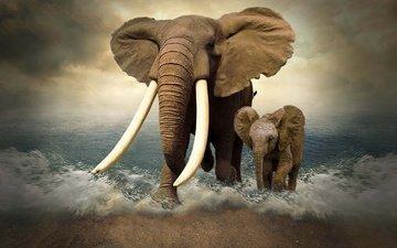 море, слон, фотошоп, слоны, слоненок, бивни