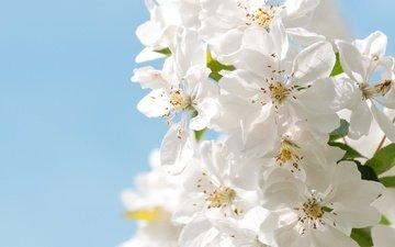 небо, цветы, макро, лепестки, сад, весна