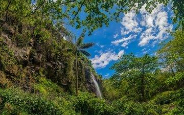 небо, облака, деревья, зелень, лес, скала, ветки, кусты, листва, водопад, пальма, франция, ste-rose, reunion