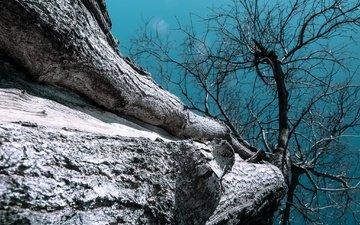 небо, природа, дерево, ствол