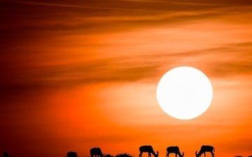 небо, солнце, закат, силуэты, антилопы