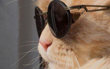 животные, кот, усы, кошка, очки, профиль, юмор, солнечные очки
