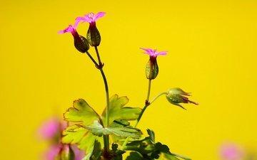 природа, цветок, куст, растение
