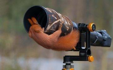 природа, фотоаппарат, животное, белка, камера, хвост, белочка, грызун