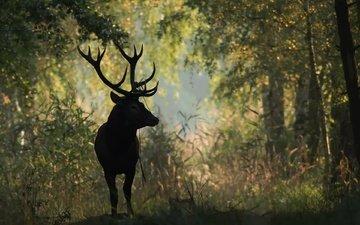 природа, лес, олень, животное, рога