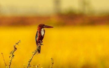 природа, растения, фон, птица, клюв, зимородок