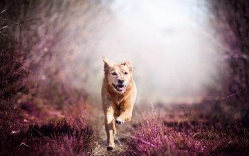 flowers, nature, dog, running